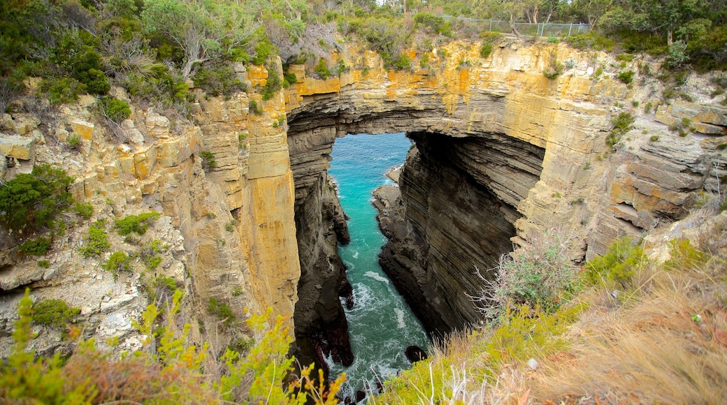 Southeast Tasmania featuring a garden, landscape views and rocky coastline