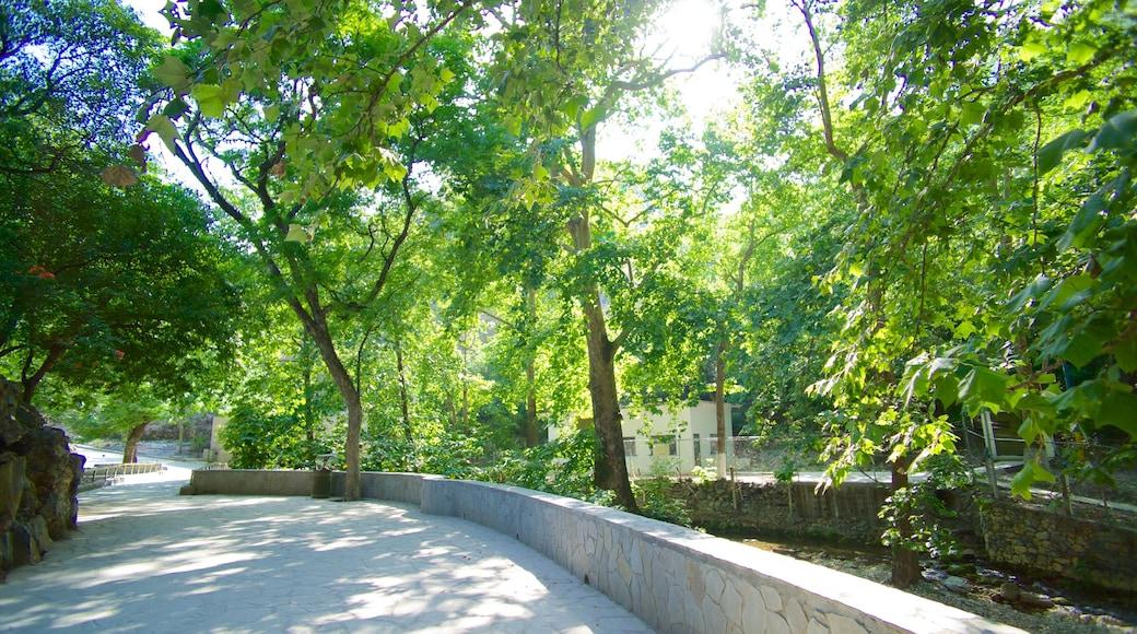 Cascada Cola de Caballo que incluye un jardín