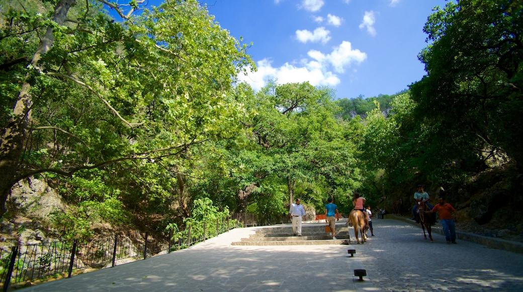 Cascada Cola de Caballo ofreciendo un parque