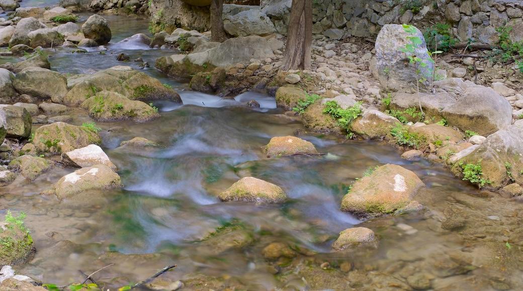Cascada Cola de Caballo que incluye un río o arroyo