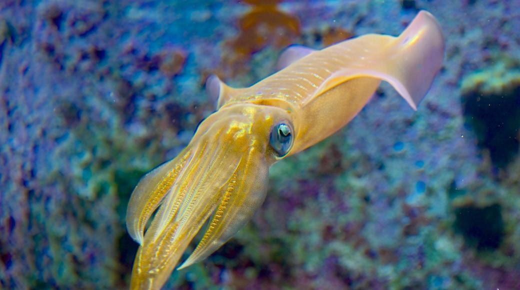 오키나와 추라우미 수족관 을 보여주는 해양 생물