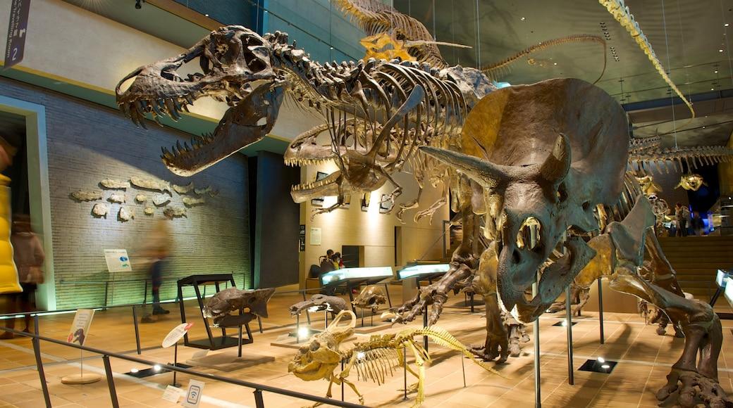 Musée de l\'Homme et d\'histoire naturelle mettant en vedette vues intérieures