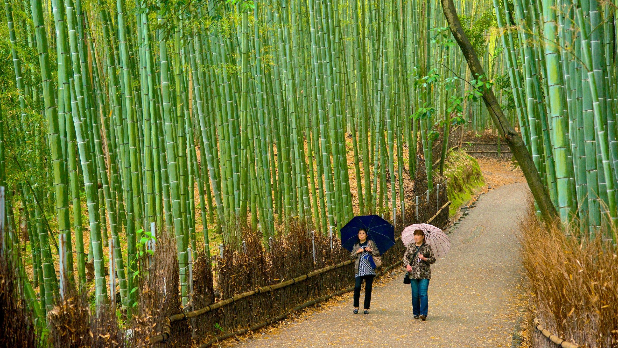 Kioto (prefectura), Japón