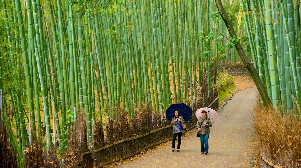 Kyoto featuring hiking or walking, landscape views and forest scenes