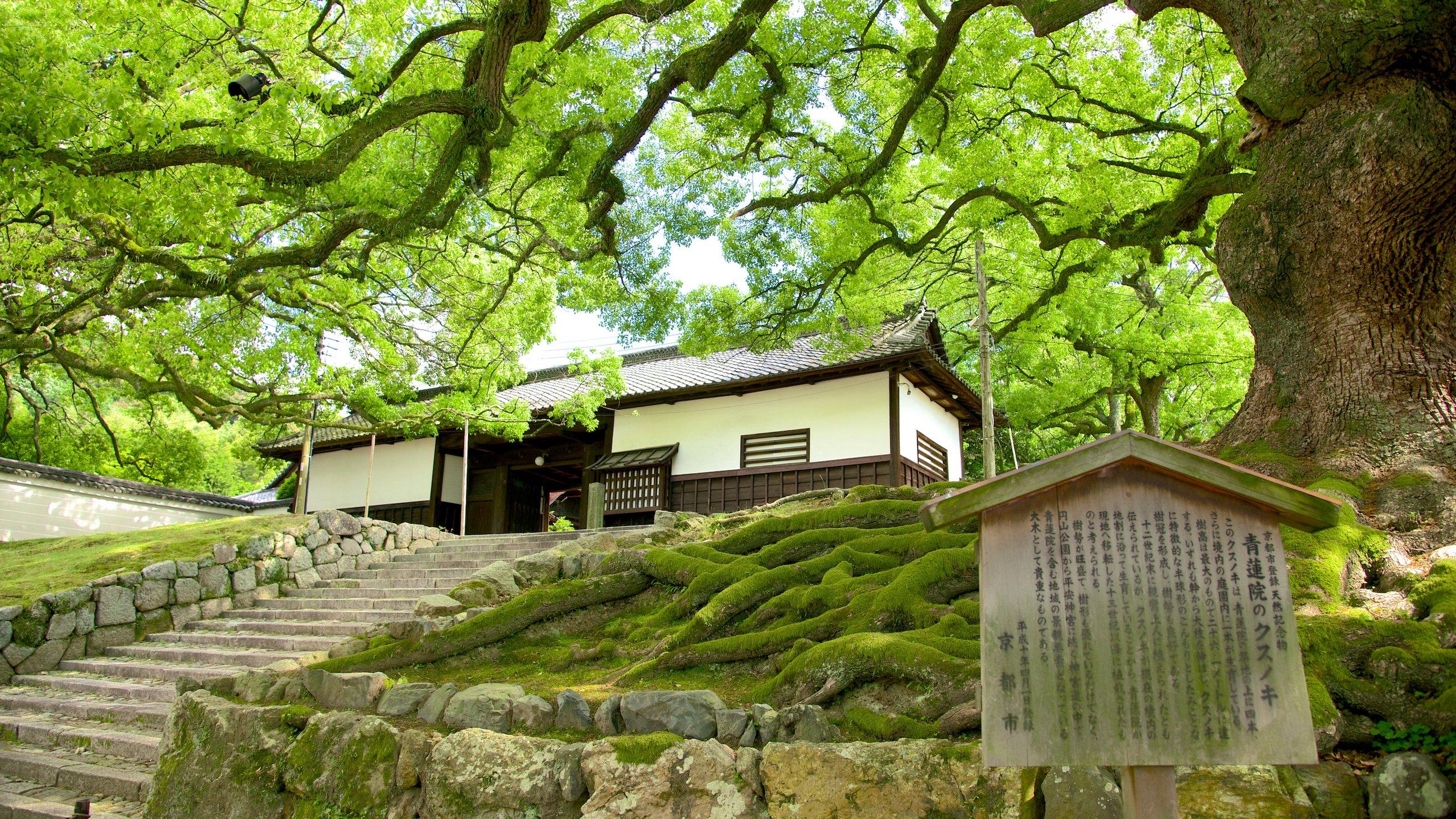 Higashiyama, Kyoto, Kyoto (prefectuur), Japan
