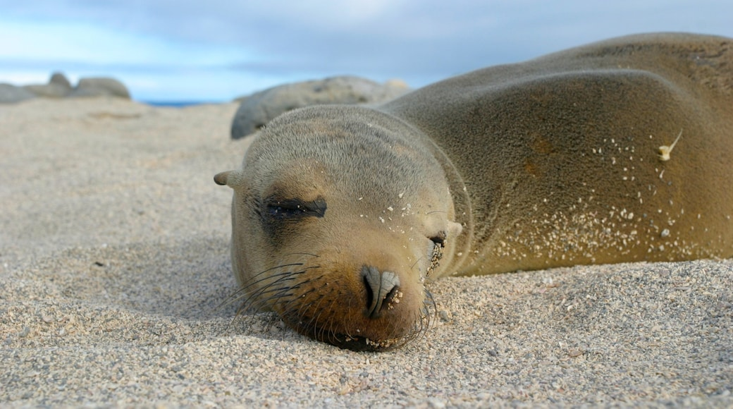 North Seymour Island which includes marine life