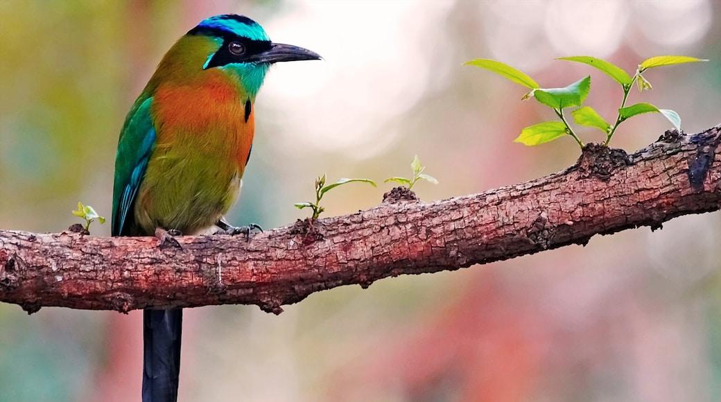 Managua featuring bird life
