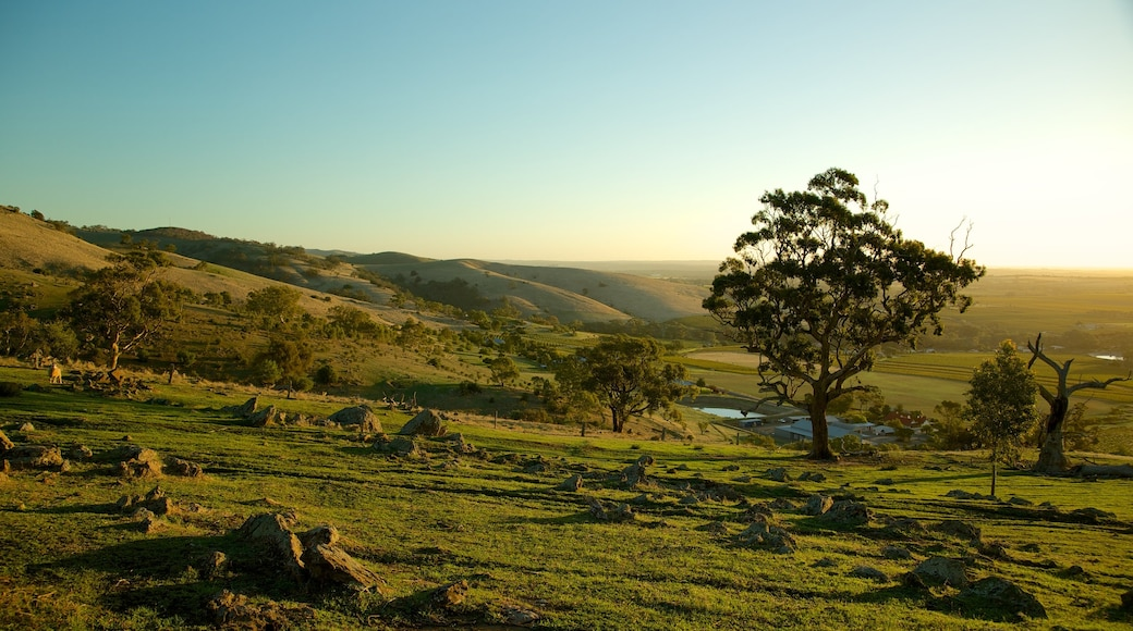 Barossa Valley which includes a sunset, tranquil scenes and landscape views