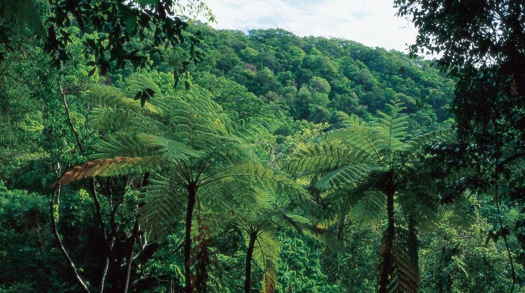 Daintree - Cape Tribulation showing landscape views and rainforest