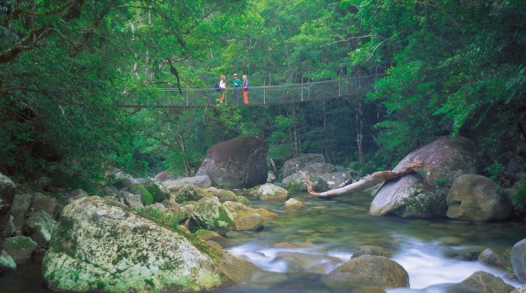 Daintree - Cape Tribulation featuring a river or creek, hiking or walking and a suspension bridge or treetop walkway