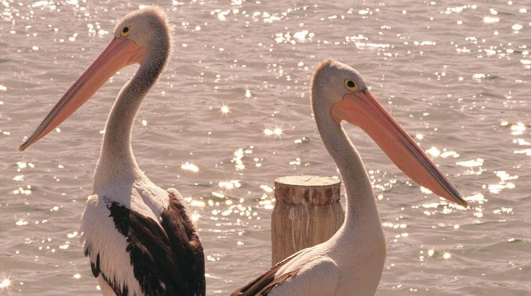 Mandurah which includes bird life