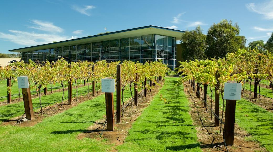 Jacob\'s Creek Vineyards which includes farmland
