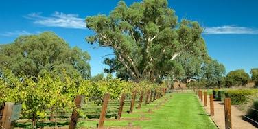 Jacob\'s Creek Vineyards