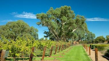 Jacob's Creek Vineyards
