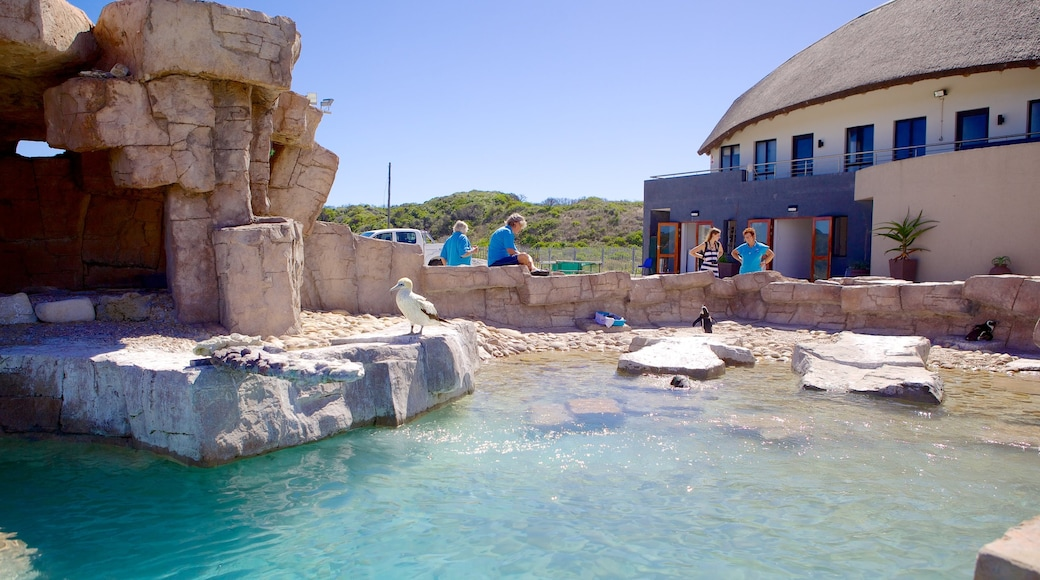 Port Elizabeth which includes a pond and bird life