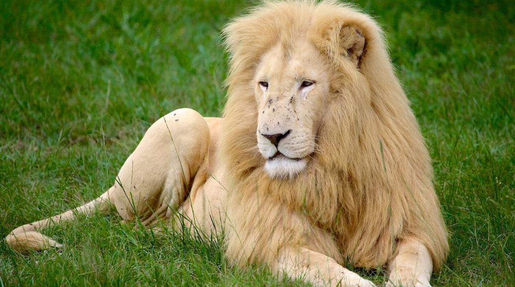 Lion Park che include animali da zoo e animali pericolosi