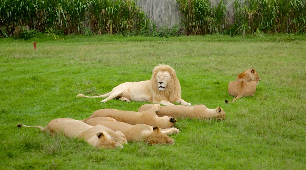 Lion Park which includes zoo animals, a garden and dangerous animals