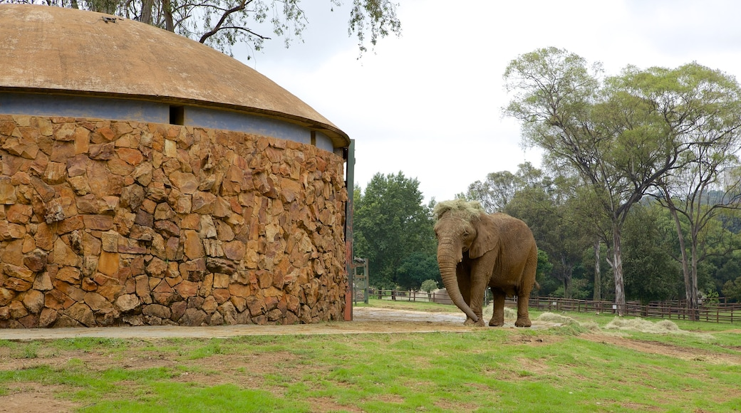 Johannesburg Zoo showing landscape views, land animals and zoo animals