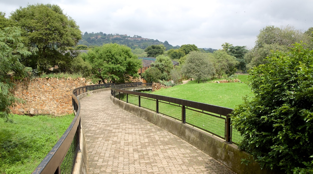 Johannesburg Zoo showing landscape views and zoo animals