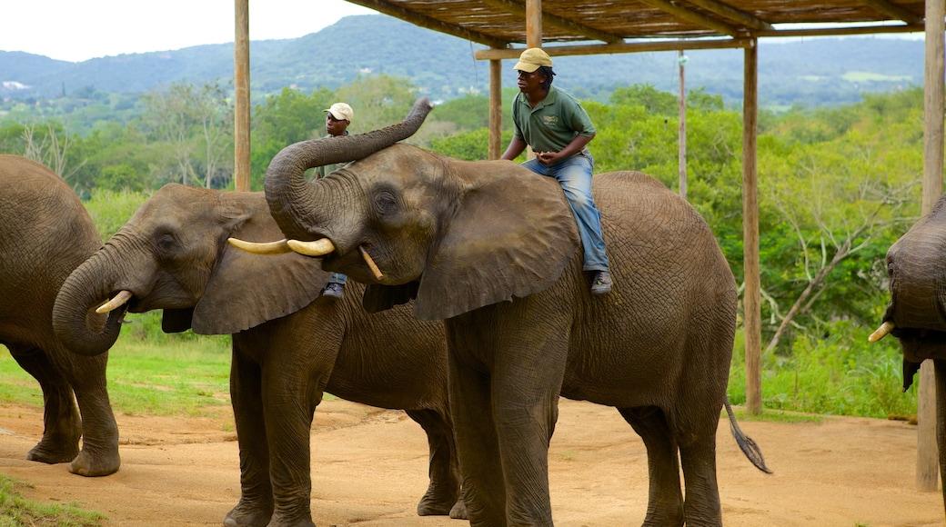 Elephant Whispers welches beinhaltet Landtiere, Zootiere und Garten