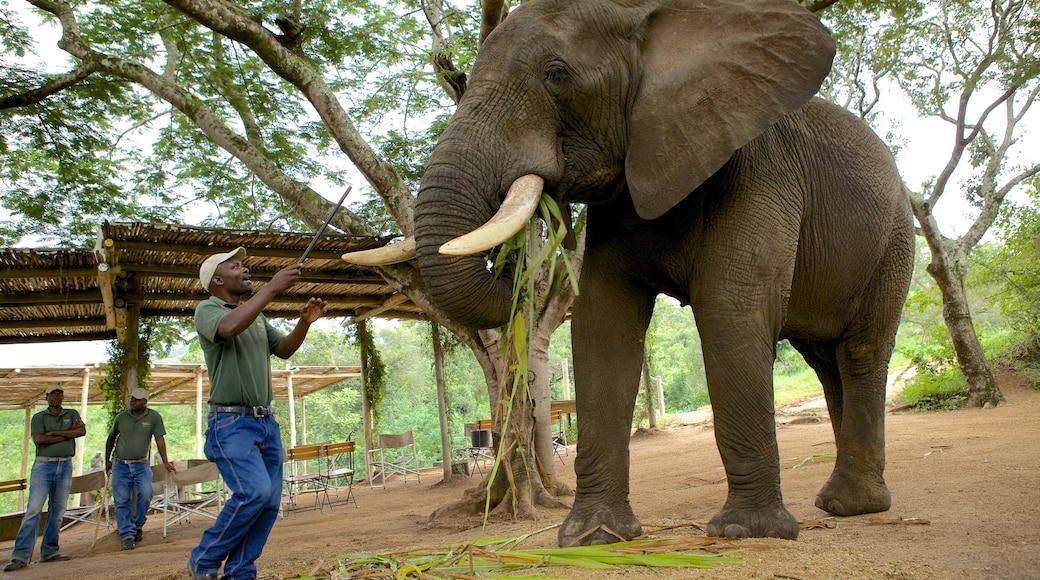 Elephant Whispers das einen Zootiere und Landtiere