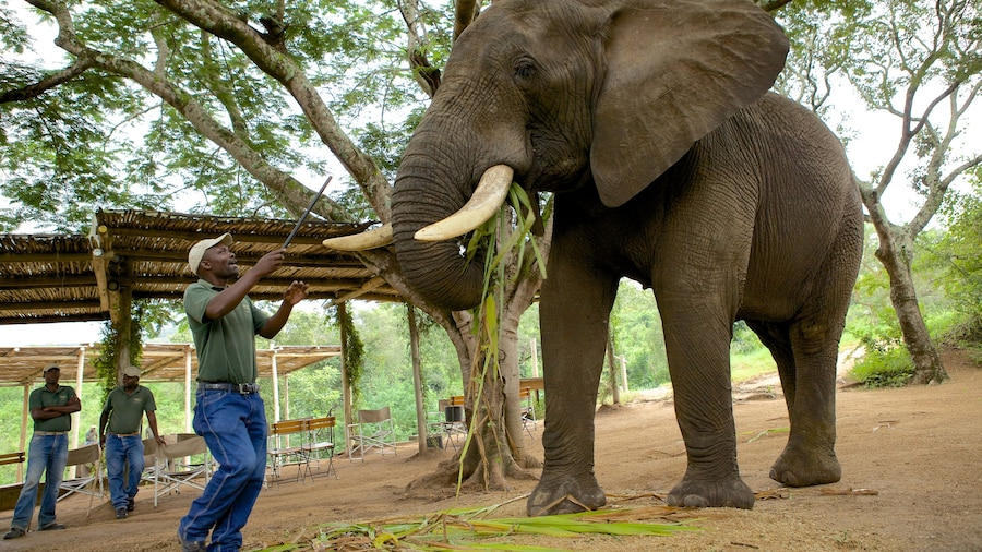 Elephant Whispers which includes land animals and zoo animals