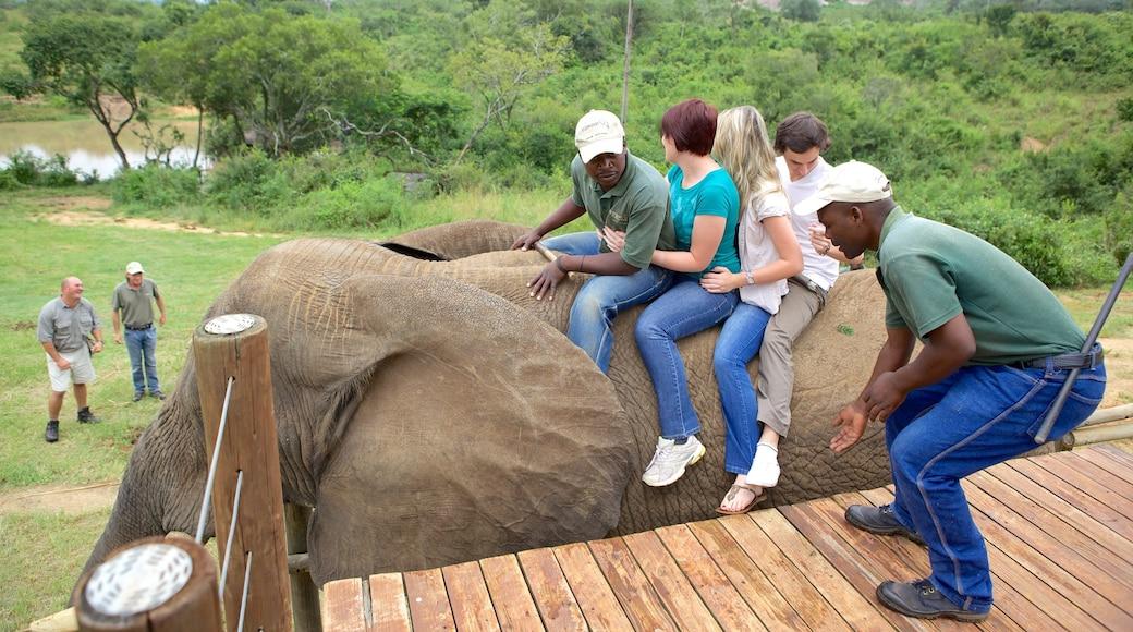 Elephant Whispers welches beinhaltet Zootiere und Landtiere sowie große Menschengruppe