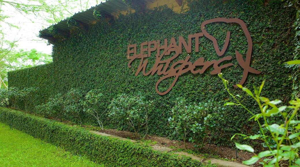 Elephant Whispers mit einem Garten und Beschilderung