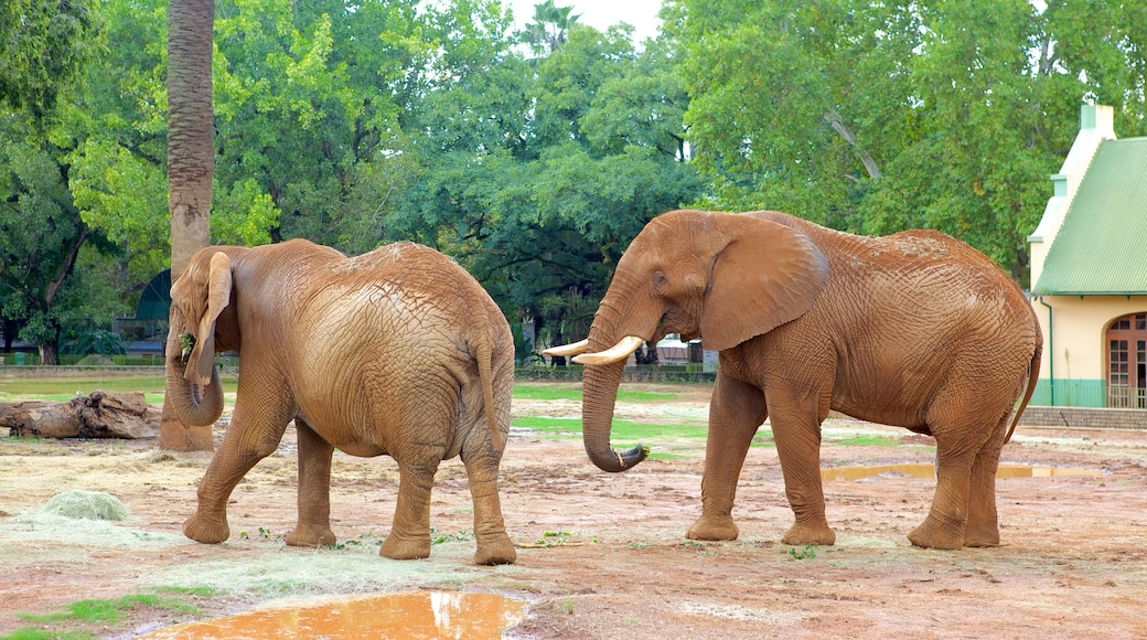 National Zoological Gardens of South Africa featuring zoo animals, a park and land animals