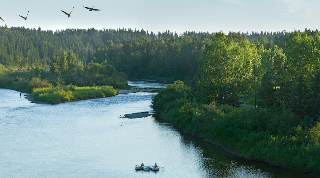 Red Deer qui includes panoramas, lac ou étang et kayak ou canoë
