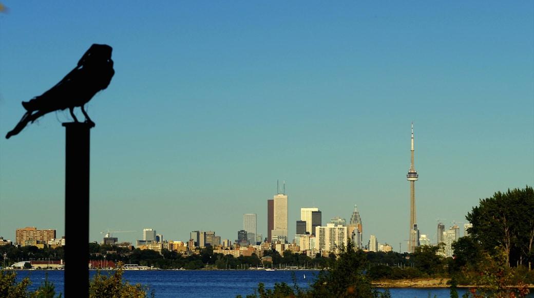 Centre Island featuring bird life, city views and a skyscraper