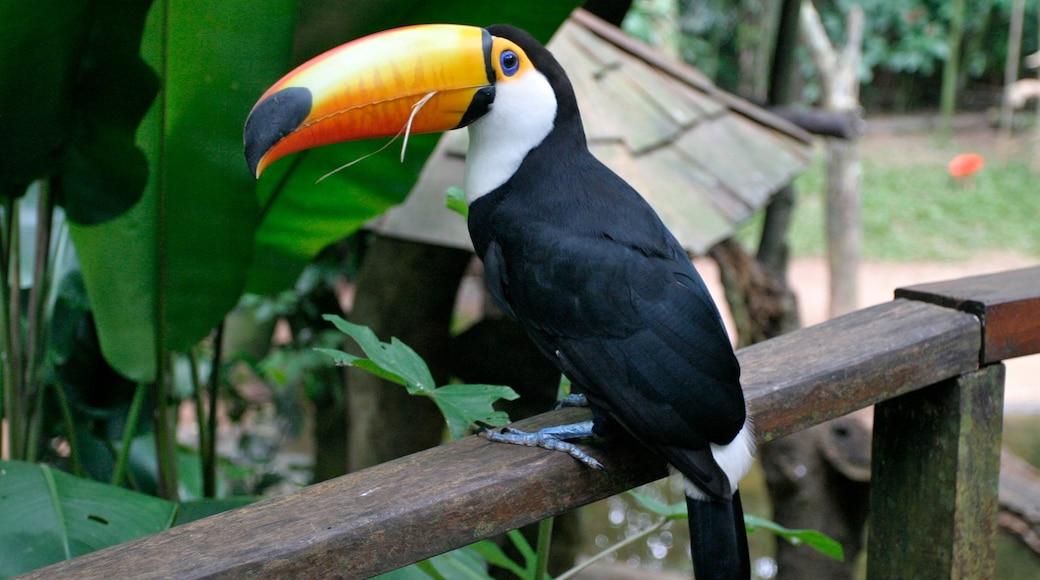 Sur ofreciendo aves y animales de zoológico