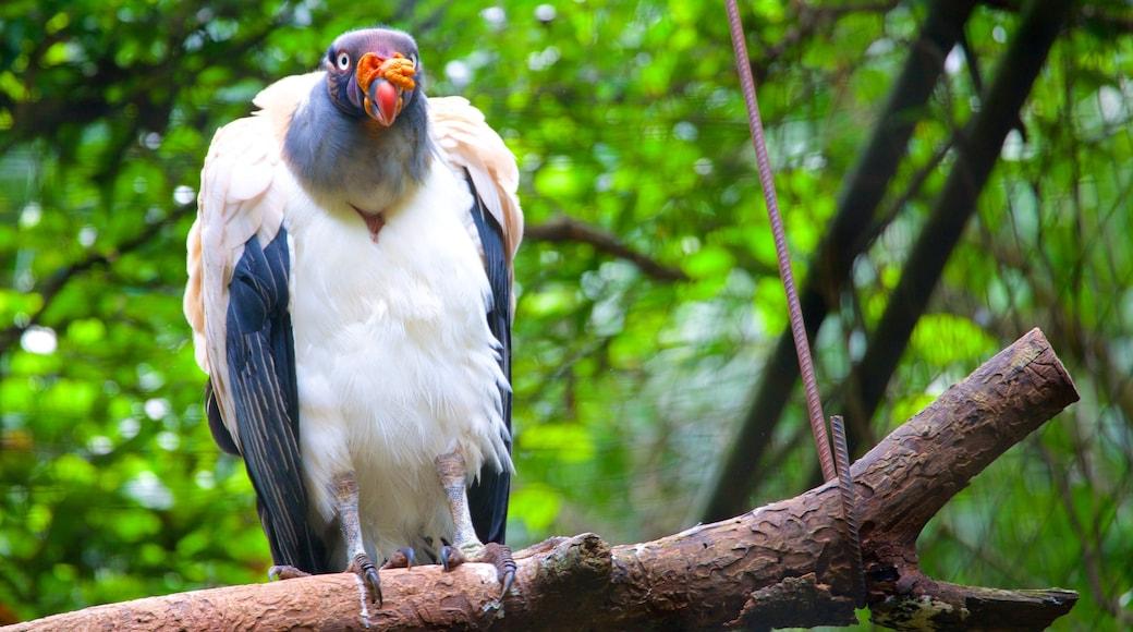Parque de las Aves que incluye vida de las aves y animales del zoológico