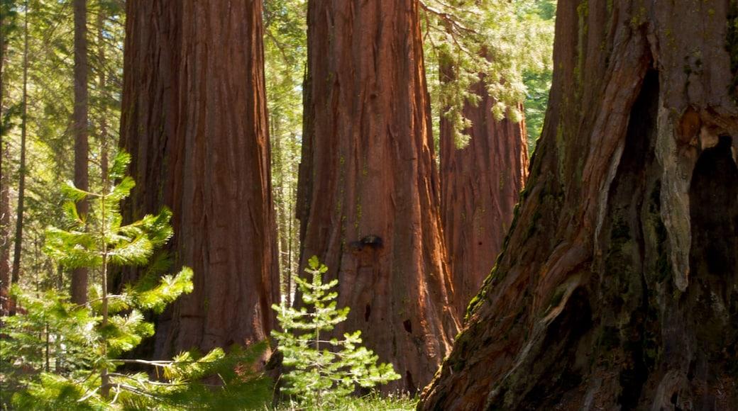 Yosemite Valley que inclui paisagem e florestas