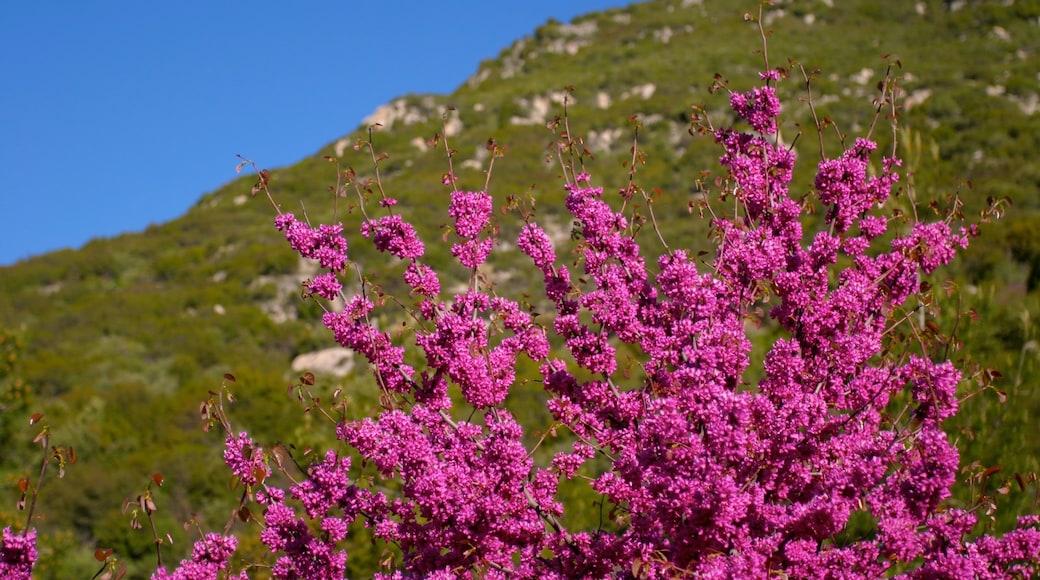 Yosemite Valley caracterizando flores silvestres, flores e um parque
