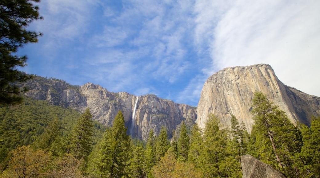 Yosemite National Park welches beinhaltet Wälder und Berge