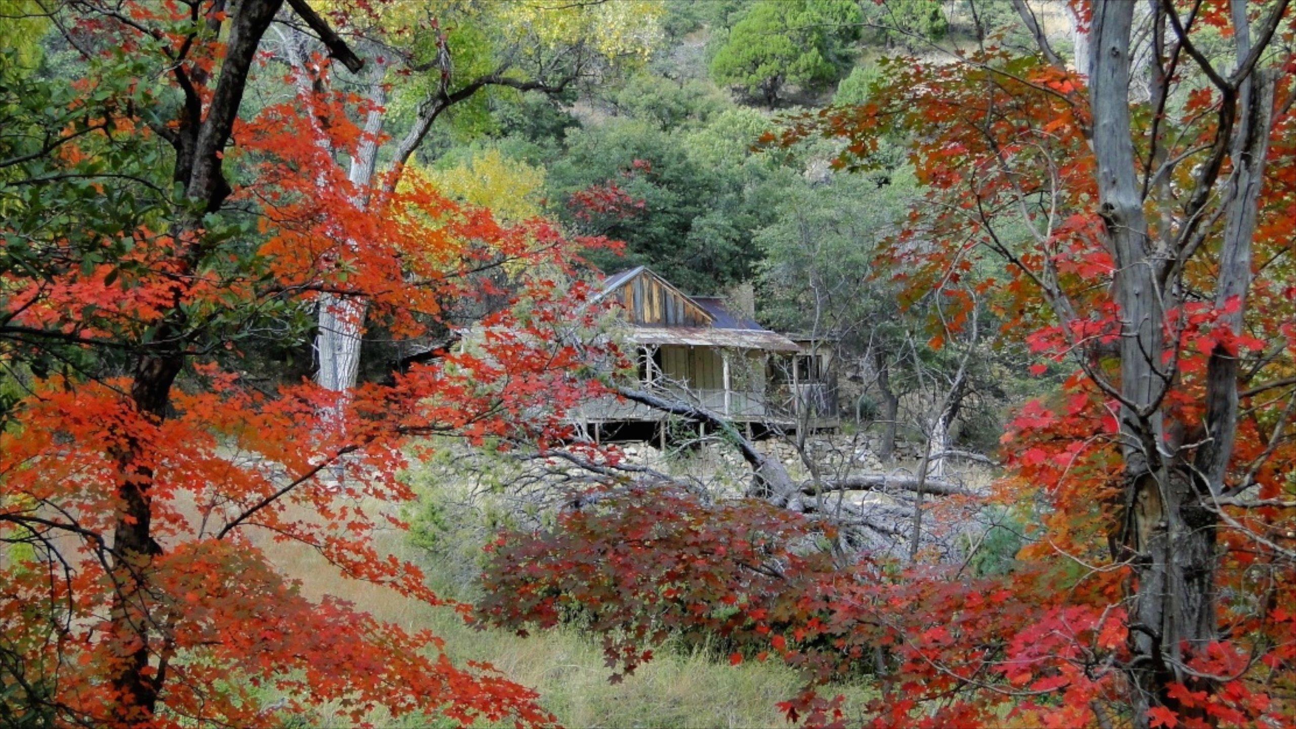 Sierra Vista joka esittää syksyn lehdet