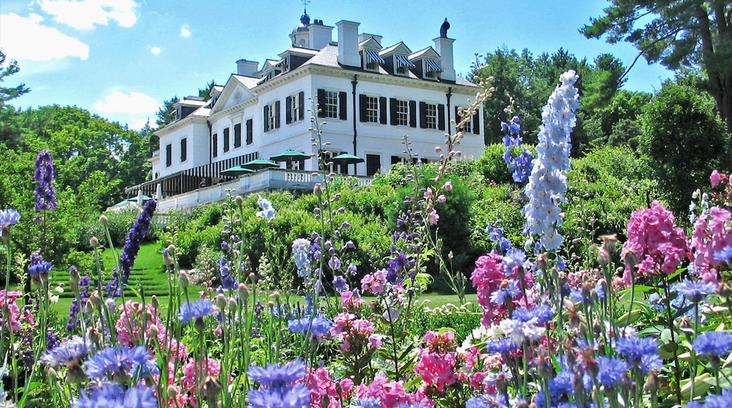 The Berkshires showing flowers