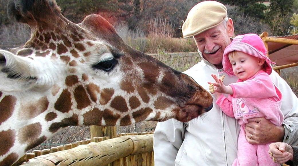Cheyenne Mountain Zoo das einen Landtiere und Zootiere sowie Familie