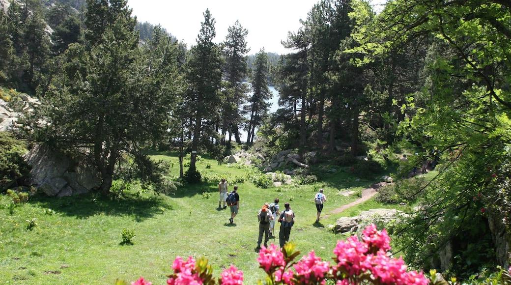 Font-Romeu-Odeillo-Via montrant jardin et randonnée ou marche à pied