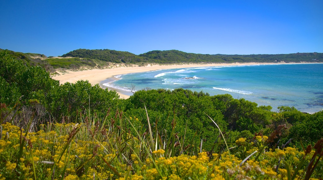 King Island featuring landscape views and a sandy beach