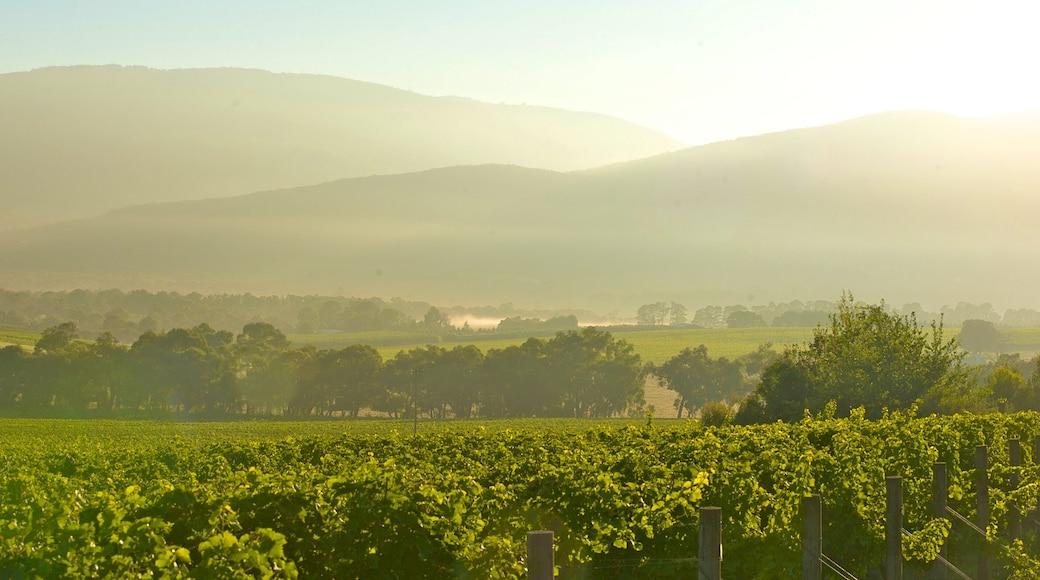 Yarra Valley showing farmland, mist or fog and landscape views