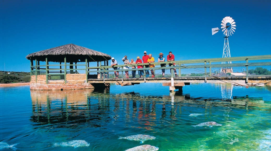 Shark Bay which includes marine life as well as a large group of people