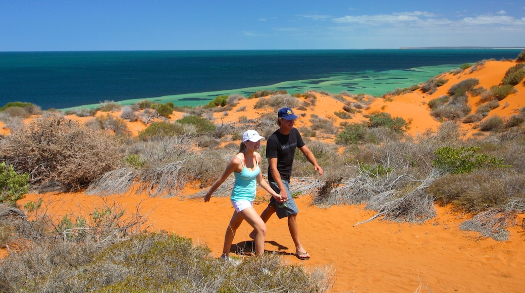 Shark Bay showing general coastal views and hiking or walking as well as a couple