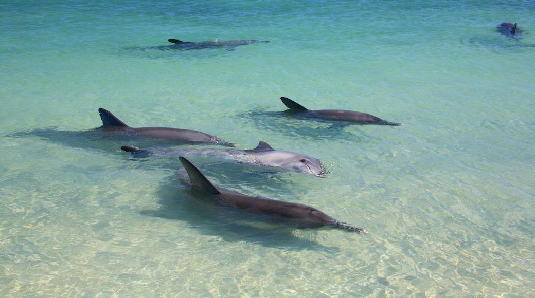 Shark Bay showing marine life