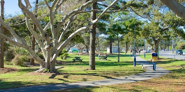 Kingscliff showing a garden
