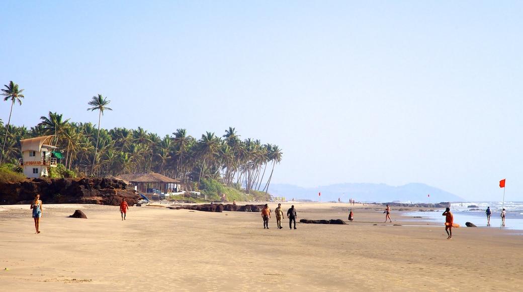 Ashvem Beach featuring tropical scenes, general coastal views and a sandy beach