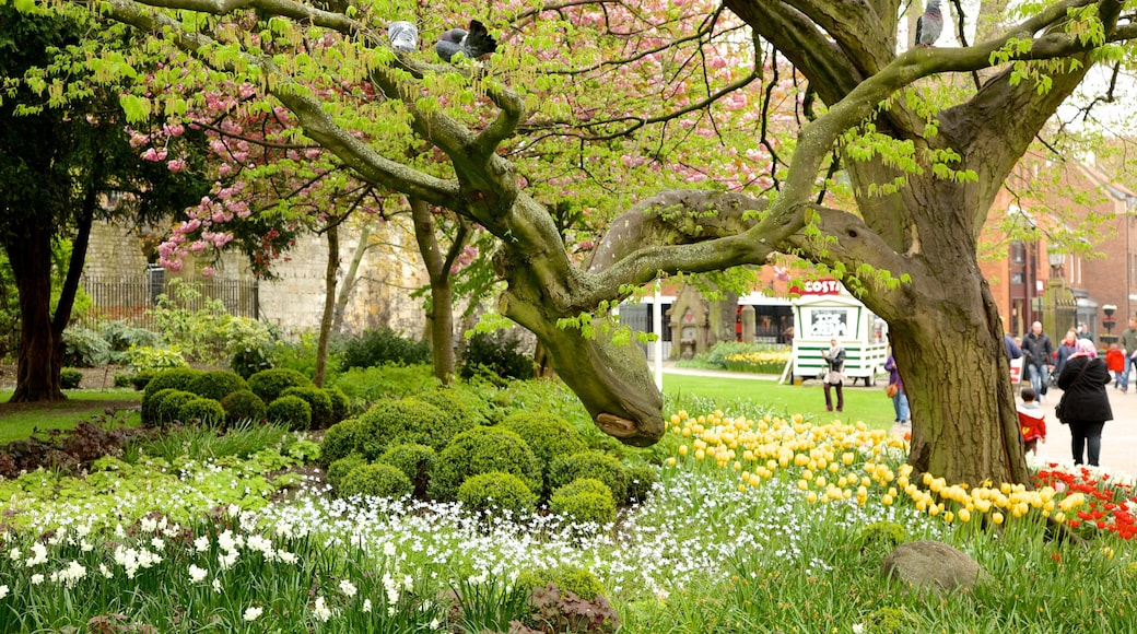 York showing flowers and a park