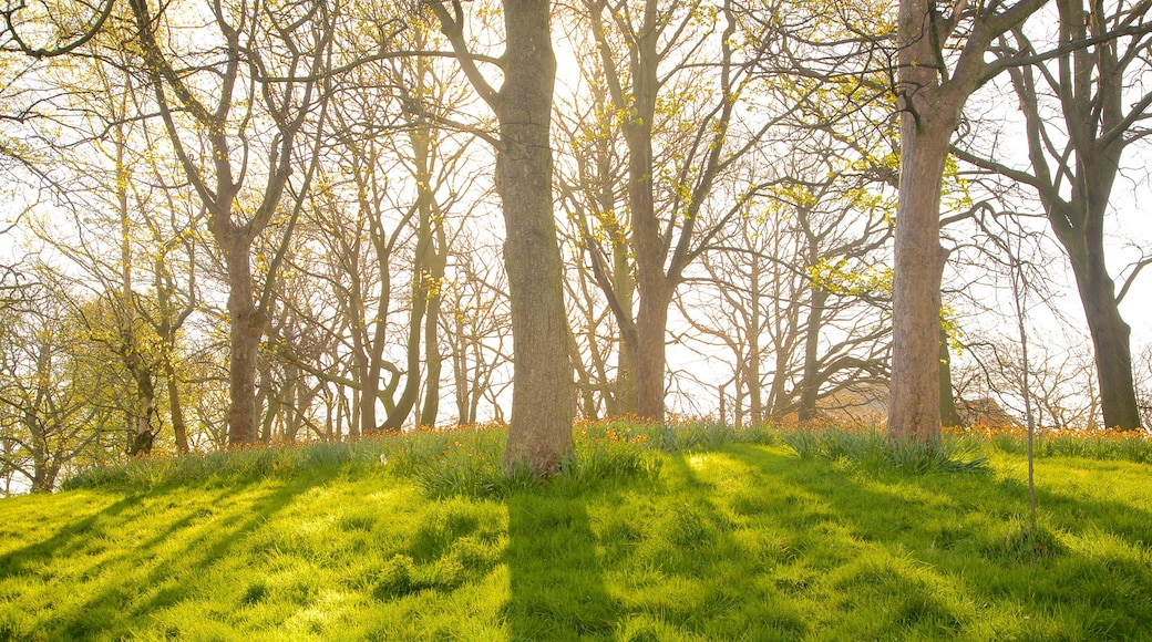 Sefton Park featuring a garden