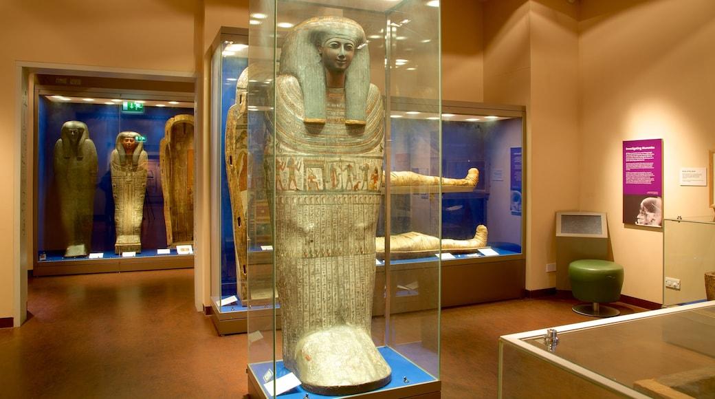 World Museum Liverpool som viser innendørs